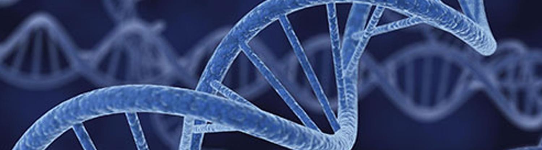 Medicina Regenerativa Miami Dr Charles Mahl Genlife
