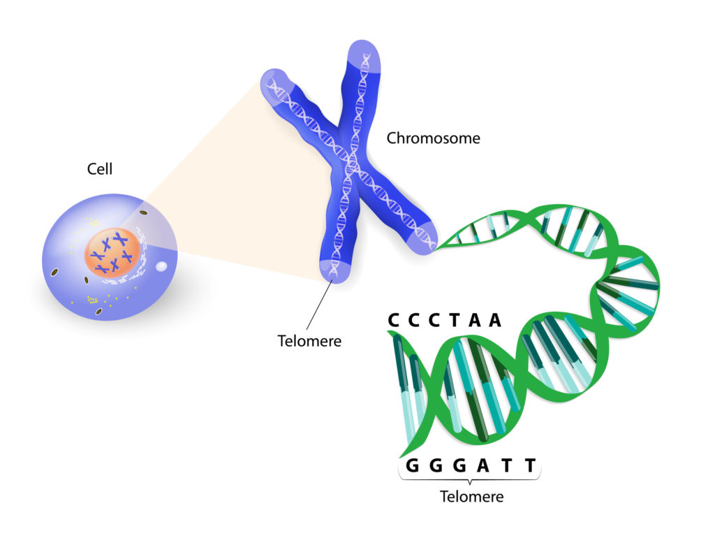 telomere testing